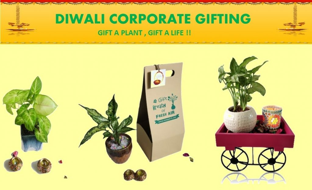 Corporate Diwali Green Gifts - NOW POT-li