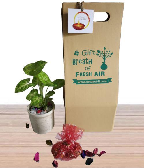 green gift pack 1